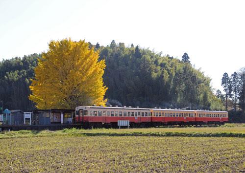 Dsc_90412lca